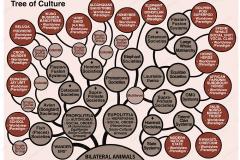 Cultura Rasa - Ivan Tucakov - Tree of Culture